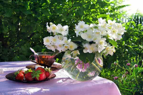 Summer flowers - 6 offers for your garden